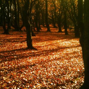 The Autumnal image of Christmas