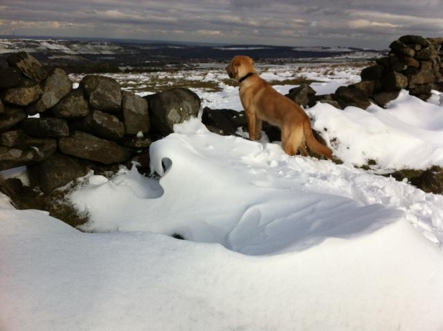Snow Dog Nelly